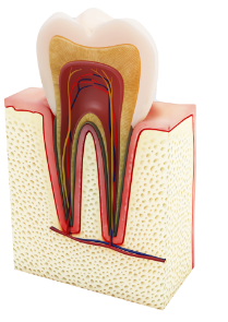 Wizualizacja graficzna endodoncji